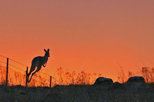 澳大利亚最美的风景图