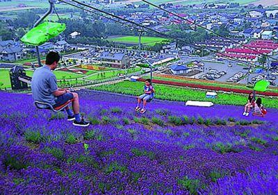 北海道中富良野旅游攻略