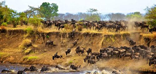 动物大迁徙 非洲大草原的盛大宴会