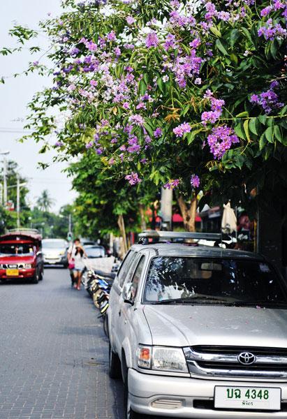 风景图片大全 东南亚 清迈 -> 泰国清迈街头图片大全