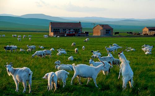 乌拉盖草原图片欣赏_内蒙古风景图片大全_中国国旅