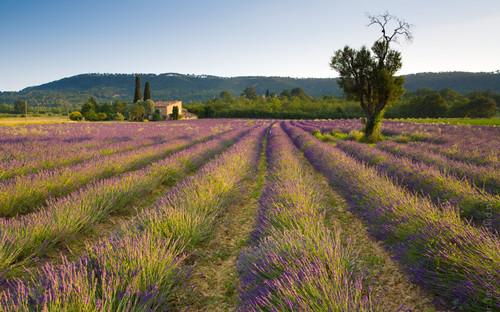 普罗旺斯风景图片大全